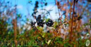 [DTMニュース]smallprint-ingredients-004-seanote-2